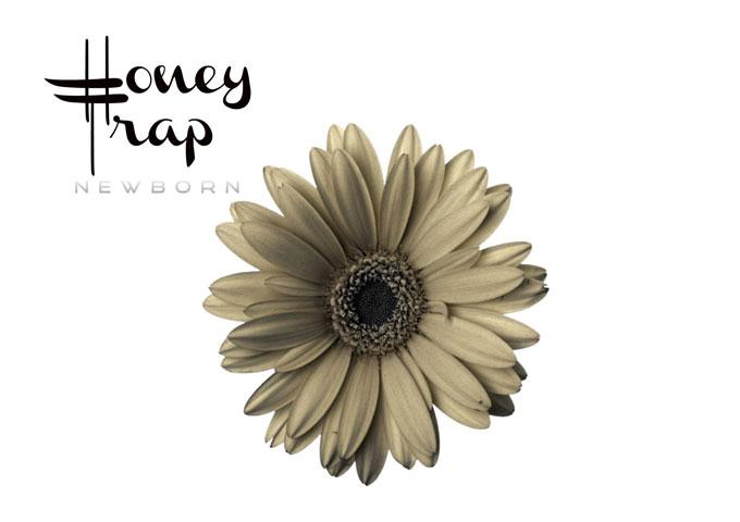"""Newborn: """"Honey Trap"""" – an Indie-Pop flavor marked by distinct vocals"""